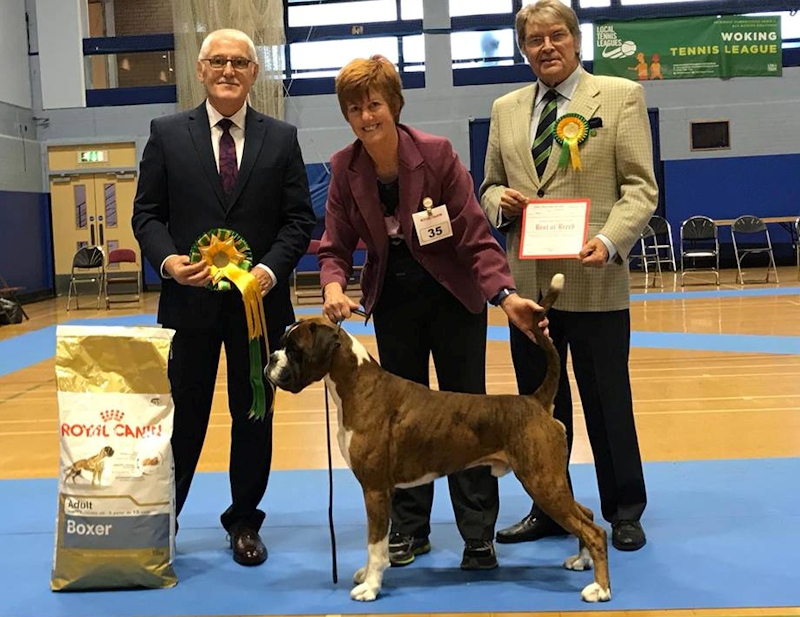 LHCBC Champ Show 2017 Best In Show
